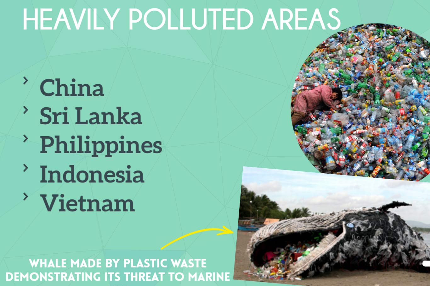 Student Synergy Project: The negative effects of plastics on our world